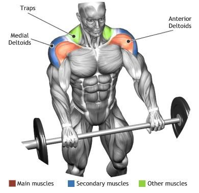 SHOULDERS - FRONT BARBELL RAISE Find more stuff: gain-lean-muscle.info