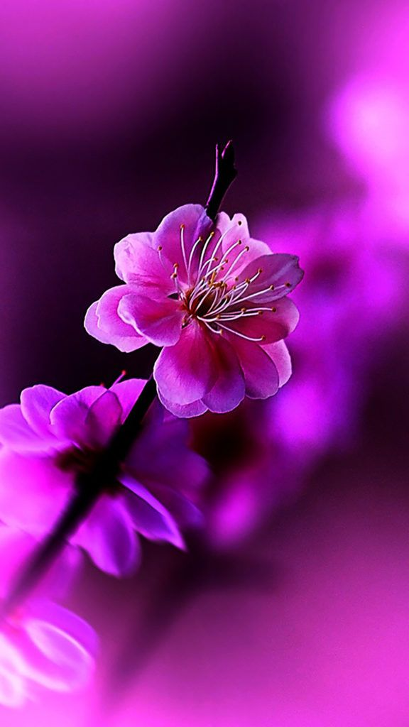 Flowers Violet Hd wallpaper android, Iphone spring