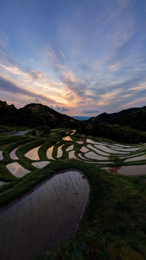 Sunrise over Terraced Rice Fields, Japan