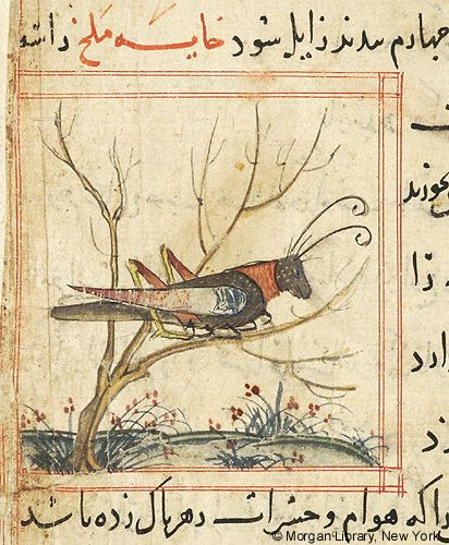 Bestiary, Locust perched on branch of shrub; flowering plants.- The Morgan Library & Museum