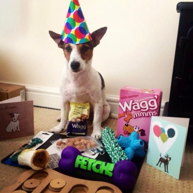 Oscar's 1st Birthday