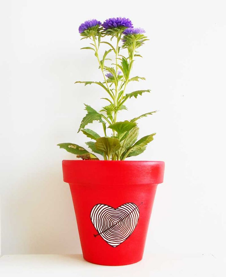 Maceta Corazón + Reina Margarita!  Hermoso regalo para San Valentín! http://chii.com.ar/hogar/79-maceta-n16-corazon-reina-margarita.html