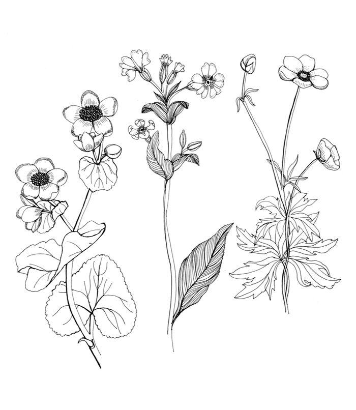 Gallery For gt Wildflower Line Drawings