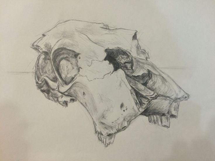 Cow's skull, graphite - Andrea Meyerholz