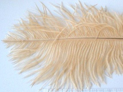 champagne ostrich feather. I don't know what I would do with this but I like it.