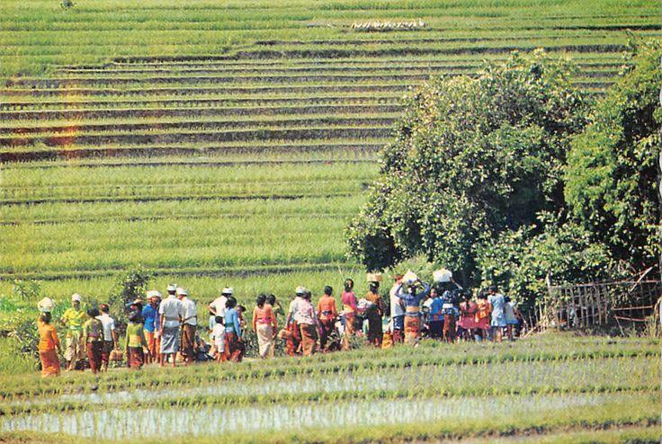 Indonesia Bali Train of Followers Heading for Temple Pekendungan | eBay