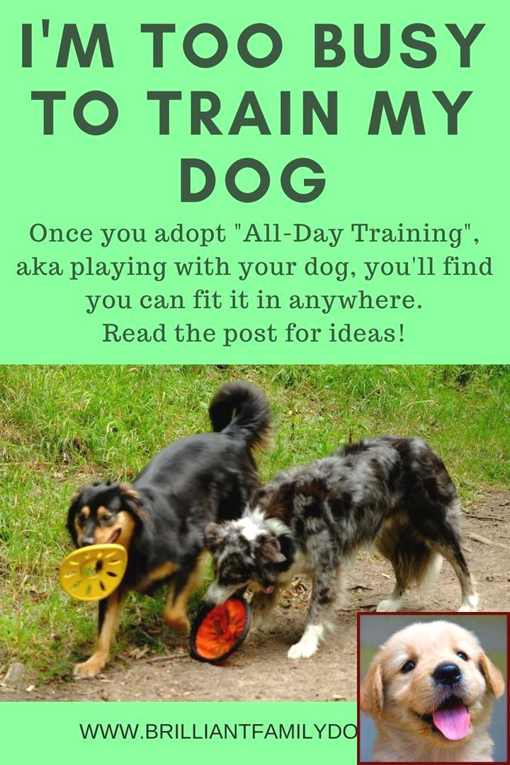 Easy Methods To Help Train Your Dog Dog Care Dog Training Dogs