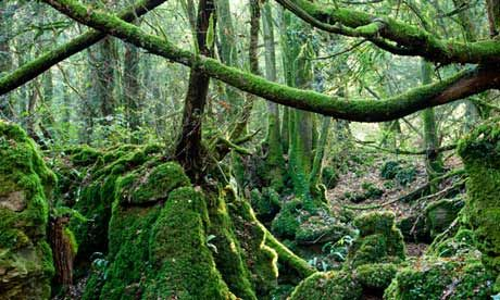 Hunt for bats in the magical setting of Puzzlewood in the Forest of Dean.