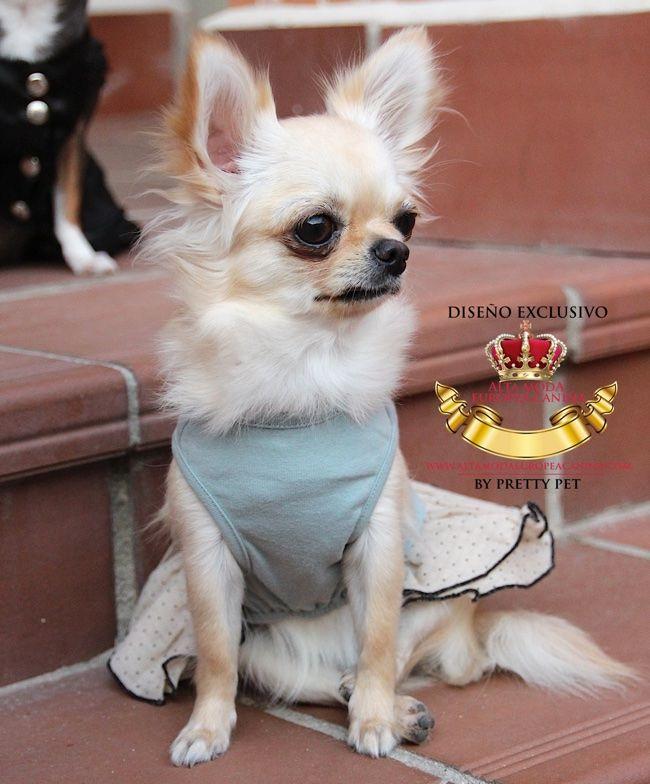 vestidos perros, moda canina