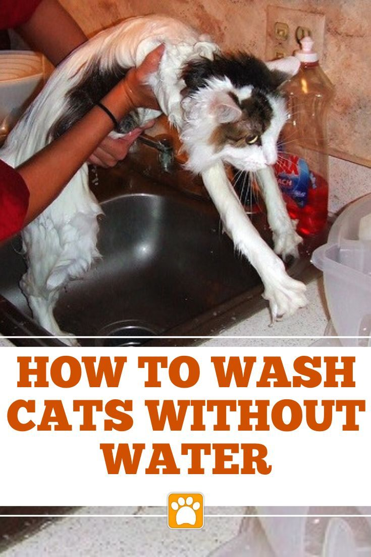 A Guide To How To Give A Cat A Bath By Cat Care Cat Bath Cat Grooming