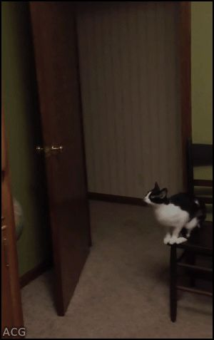 ACG • CAT GIF • Woah! Ninja Cat jumps from chair to top of wood bedroom cabinet