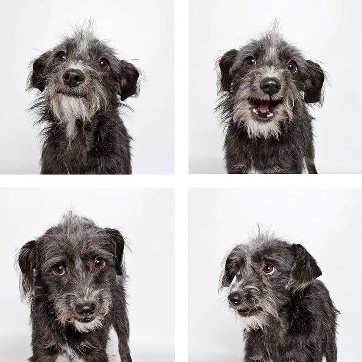 Psy ze schroniska uratowane dzięki oryginalnej sesji fotograficznej - Joe Monster