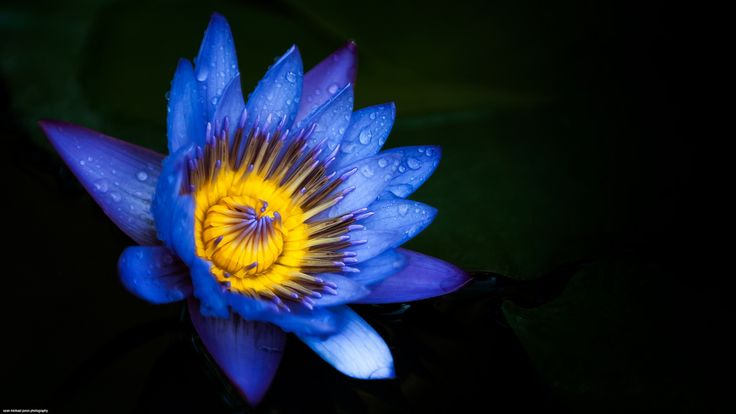 THE ART OF TROPICAL LIGHT posted a photo:  During the day its often the macro lens thats attached to my camera, looking for something really cool, in this case a blue water lily glowing in a shaded corner of the gardens.  Taken at Long Hai on the South Coast of Vietnam.