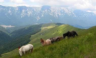 Transylvanian landscape with horses