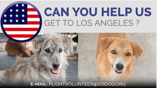 Are you departing from THAILAND and flying to LOS ANGELES, USA? Flight volunteers wanted! Can you help us get adopted dogs like Blake and Duchess to their new homes? If you are traveling FROM Thailand TO Los Angeles, on BOOKED tickets with Thai Airways, All Nippon Airways (ANA), China Airlines, Qatar, Korean Air, JAL, EVA, Lufthansa or KLM, please EMAIL jan@soidog-foundation.org for more information. http://www.soidog.org/en/be-a-flight-volunteer
