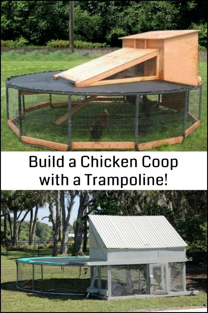Be inspired and see the various ways you could turn an old trampoline into a chicken coop!