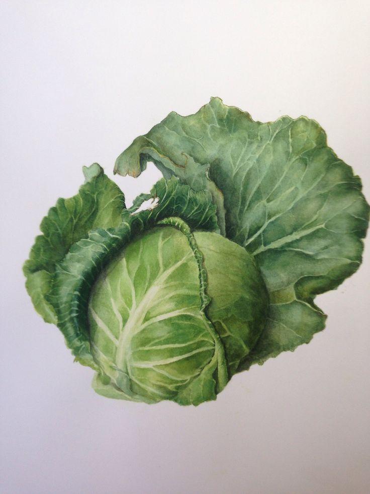 "'kitchen art' series, ""the brassicas"" by Leda Turner leda@turners.net.au"