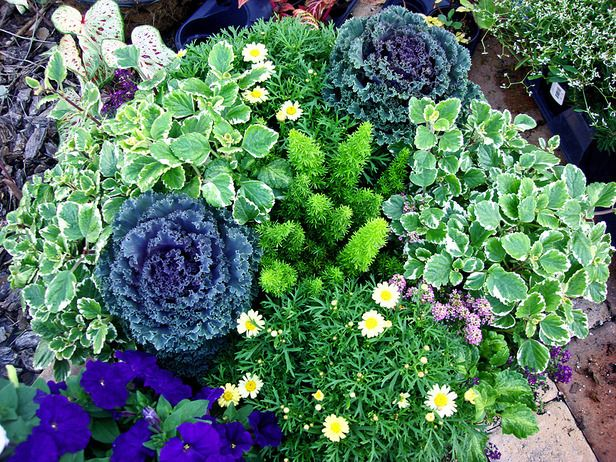 Gorgeous Garden in a Pot This beautiful container garden includes ornamental kale,