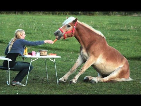 Funny Horse Videos - Try Not To Laugh [BEST OF] Published on Nov 6, 2016. Funny horse videos, funny horse fails or simply funny horses