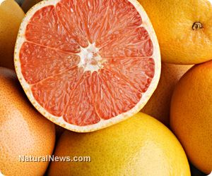 """GRAPEFRUIT NATURALLY PREVENTS FORMATION OF KIDNEY CYSTS. Naringenin, known for its bitter taste in grapefruit, has been found to successfully prevent the formation of cysts in the kidneys by """"regulating the PKD2 protein responsible for the condition,"""" as stated in a recent report."""
