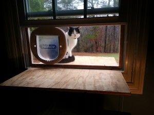 DIY cat door in a window. My momma says buy a kitty door or the cat gets thrown away.