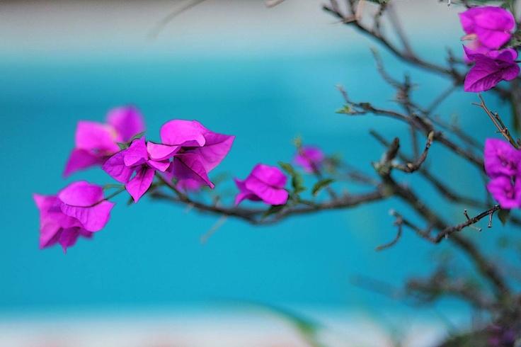 Veranera de mi jardín! JAIRO GUTIERREZ PHOTOGRAPHER • COLOMBIA