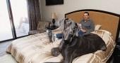 Ecco il cane più grande del mondo