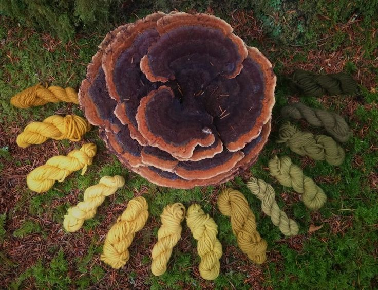 An Exploration of Mushroom and Lichen Dyes