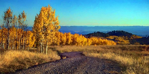 « Autumn Aspens »by Nikolyn McDonald showcases nature's golden glory of these trees in the fall.  Their yellow and orange foliage is complemented by the blue of the Southwestern sky. season,road,vista,landscape,trees,leaves,color,populous,scene,scenic,gold,gravel,natural,utah,boulder mountain,dixie national forest,view,viewpoint,grass,deciduous,colony,stand,grove,clonal,complementary,october,panoramic,panorama,crop,nikki,nikolyn,mcdonald