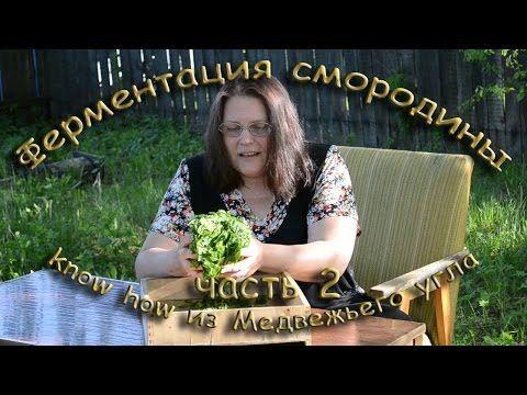 ФЕРМЕНТАЦИЯ СМОРОДИНОВОГО ЛИСТА - YouTube