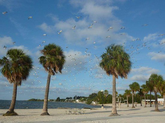 Alfred McKethan Pine Island Park (Spring Hill) - All You Need to Know Before You Go (with Photos) - TripAdvisor