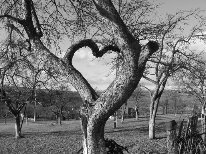 Hearts and Love All Around!