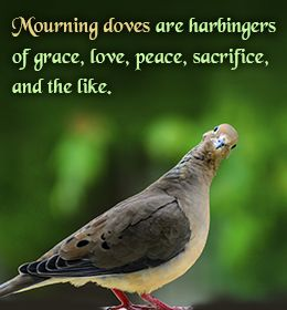 Not my mourning doves..they're currently the assholes of my feeders.