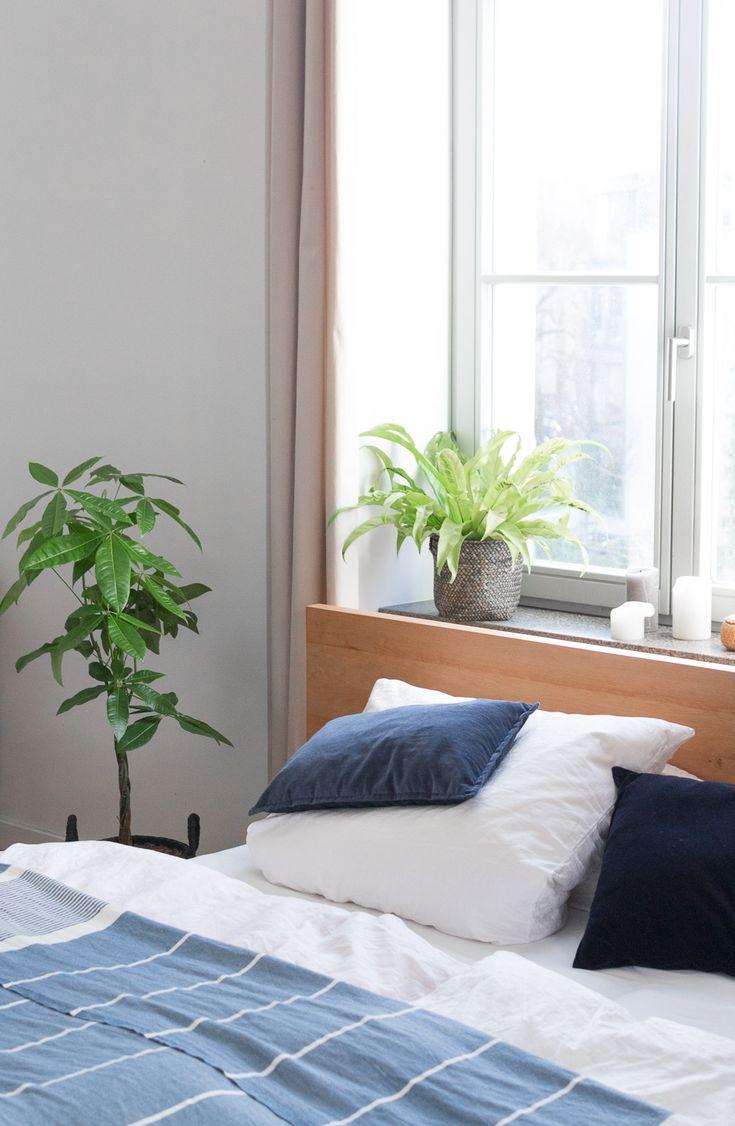 105 best Zimmerpflanzen images on Pinterest   Indoor plants, House ...