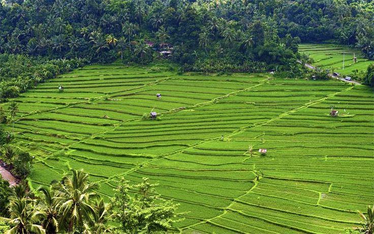 Ontdek de mooiste rijstvelden van Bali tijdens uw droomreis over het godeneiland! #Indonesie #Bali #vakantie #travel #reizen #rijstvelden #originalasia