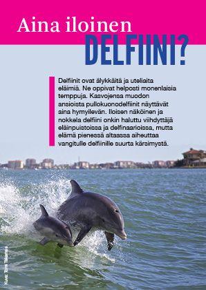 Aina iloinen delfiini? -esite.   Voit lukea esitteen myös pdf -muodossa osoitteessa http://www.oikeuttaelaimille.net/sites/default/files/materiaalit/esitteet/delfiinilenttari.pdf