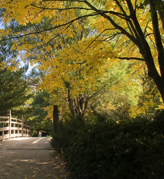 Kariya Park in Mississauga, Ontario in the Fall.