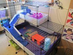 Guinea Pig Cage Photos