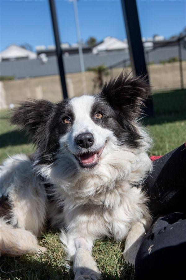 Puppy Farm Rescue Border Collie Border Collie Puppies Collie