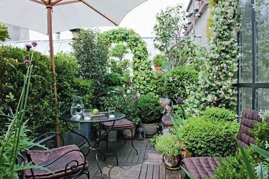 Une terrasse végétalisée pleine nature sur les toits parisiens. Jasmin, camélia, olivier, buis, lierre, vigne vierge et herbes aromatiques se mèlent dans cet univers extraordinaire