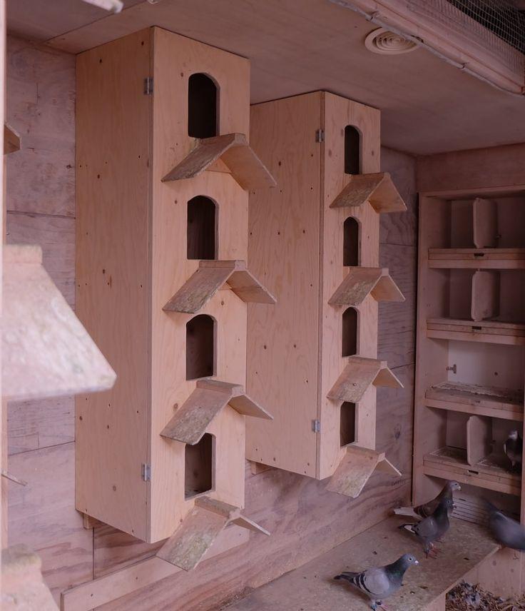 Image result for pigeon loft trap door designs