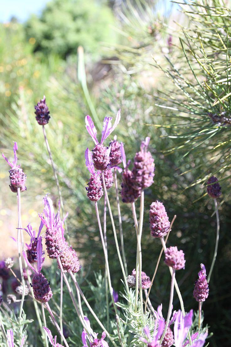 Tipos de Plantas y Flores on Pinterest  Gardens, The plant and En