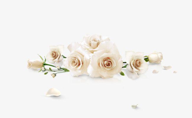 Derrama Rosas Blancas Derramado Rosa Blanca Rosas Png Y Psd Para Descargar Gratis Pngtree White Flower Png White Roses Instagram Wallpaper