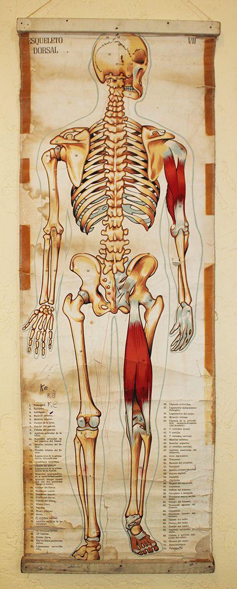 vintage medical chart