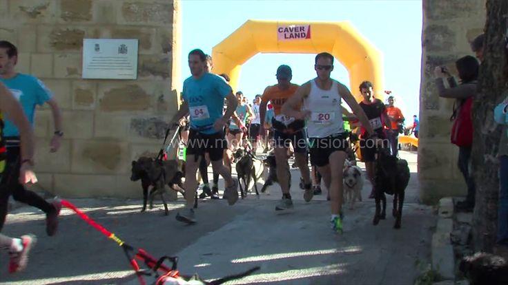 Montilla............Trofeo Andaluz Canicross-Bikejoring Castillo de Montilla -Este trofeo, que deriva de las carreras de trineos con perros (mushing) y en la que participan atletas o ciclistas acompañados de sus respectivos perros, fue celebrado por primera vez en 2012 y organizado por el Servicio Municipal de Deportes y el Ayuntamiento de Montilla con la ayuda de patrocinadores.