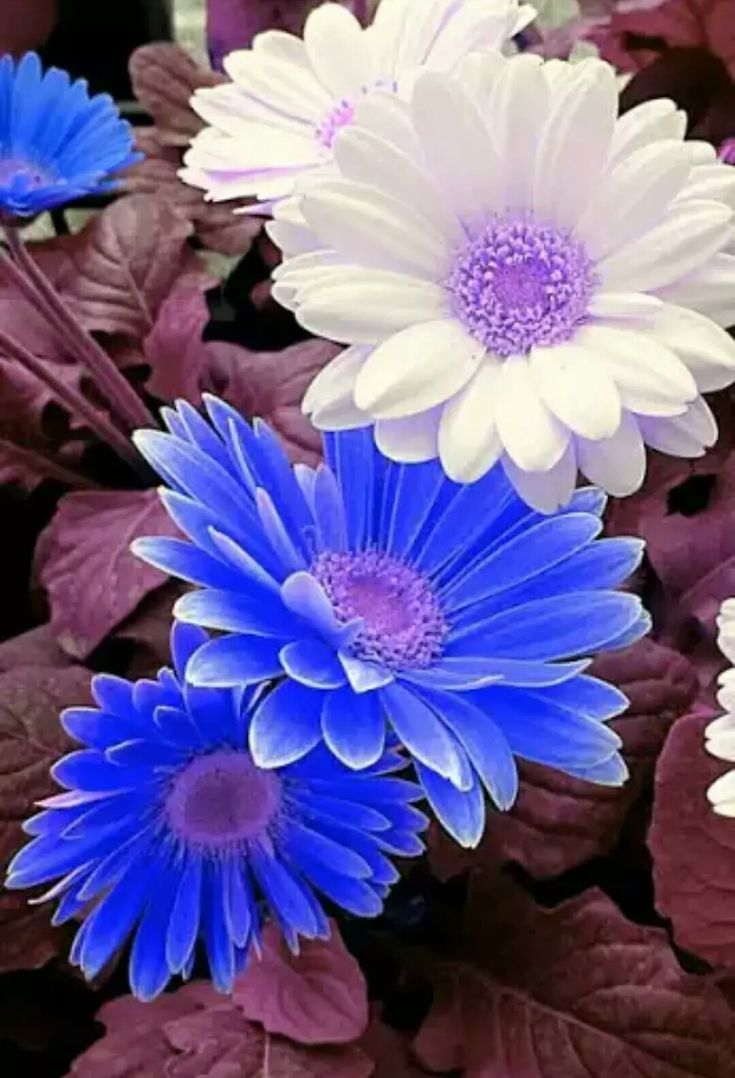 1000+ Images About FLORES Y PLANTAS On Pinterest ...