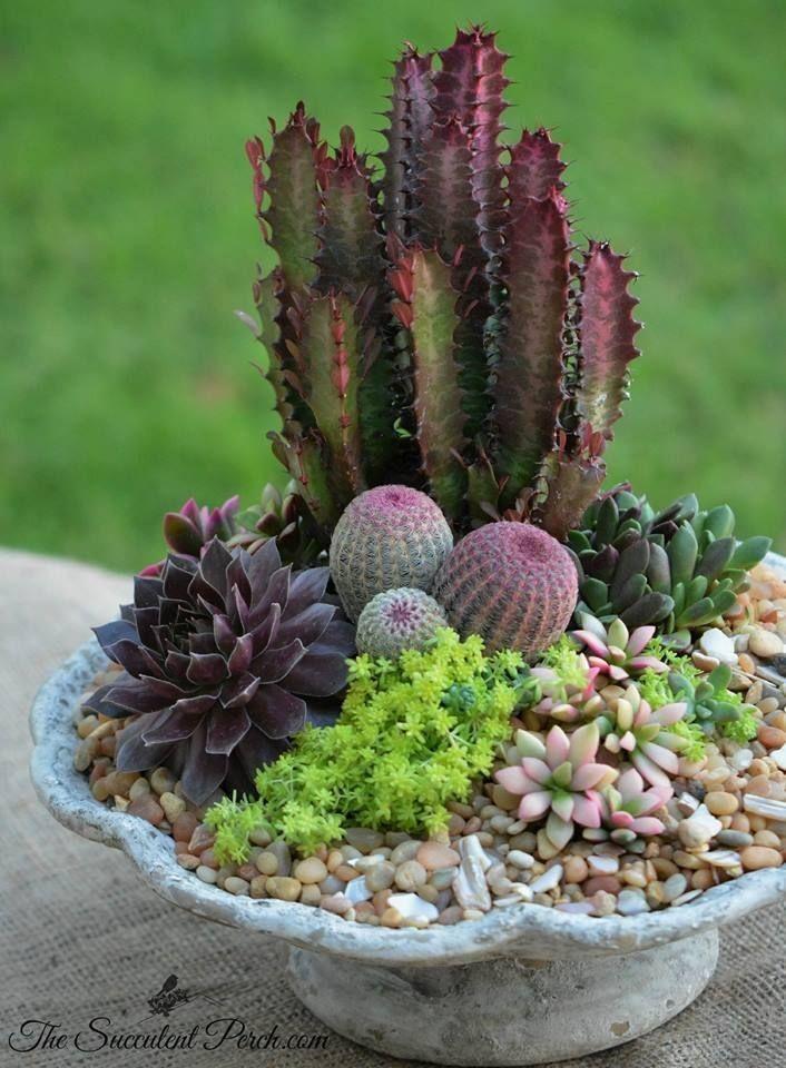 Succulent Container Garden Ideas Unique A Cornucopia With Euphorbia Cactus And Succulents