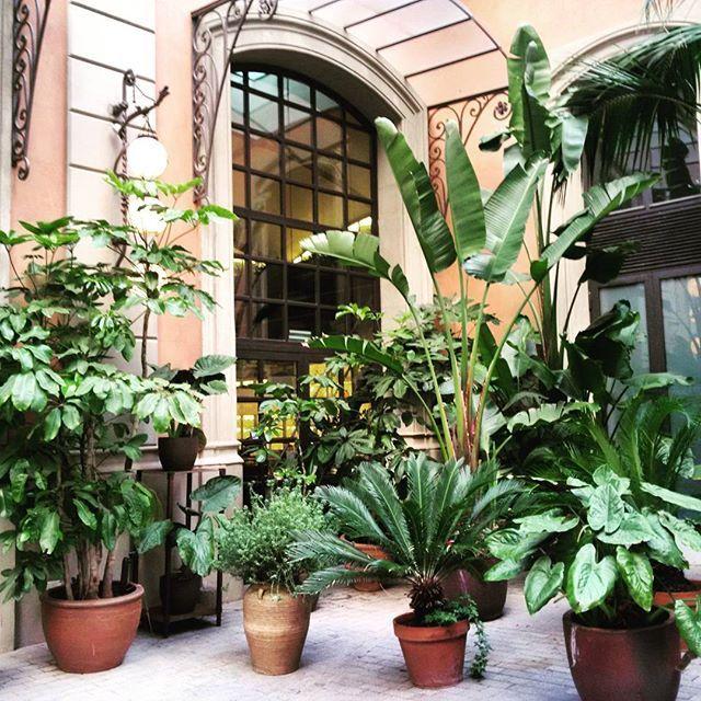 #ElNacional #restaurant #Barcelona #Catalonia #Catalunya #modernism #plants #green #mediterranean #decor #decorgoals #mediterraneanstyle #eatBarcelona #zjedzBarcelone #travel #aroundtheworld #beautiful #beautifulplace #barceloning #visitbarcelona