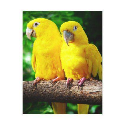Sun Conure Parrots Tropical Fine Art Photography Canvas Print - photography gifts diy custom unique special