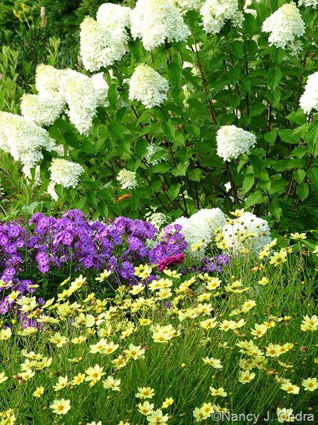 limelight hydrangea companion plants hydrangea. Black Bedroom Furniture Sets. Home Design Ideas